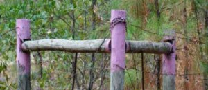 If You Stumble Across a Post Painted Purple… You Should Immediately Leave the Area